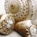 Shell Collage - Shell Collage