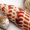 Shell Collage - Linen Shell Collage